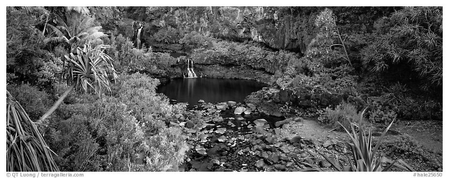 Tropical pools, waterfalls, and vegetation. Haleakala National Park (black and white)