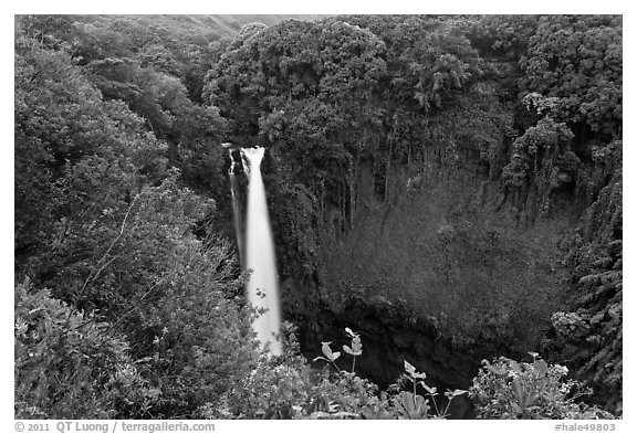 Makahiku falls plunging off a lush, green cliff. Haleakala National Park (black and white)