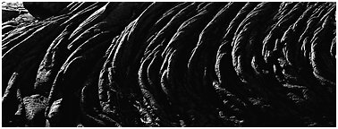Hardened rope lava riples. Hawaii Volcanoes National Park (Panoramic black and white)