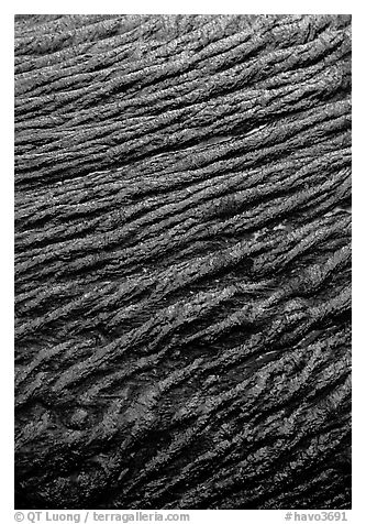 Ripples of flowing pahoehoe lava detail. Hawaii Volcanoes National Park (black and white)