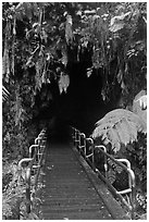 Boardwalk and entrance of Thurston lava tube. Hawaii Volcanoes National Park, Hawaii, USA. (black and white)