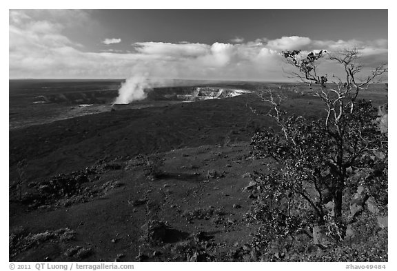 Ohia tree and Kilauea caldera. Hawaii Volcanoes National Park (black and white)