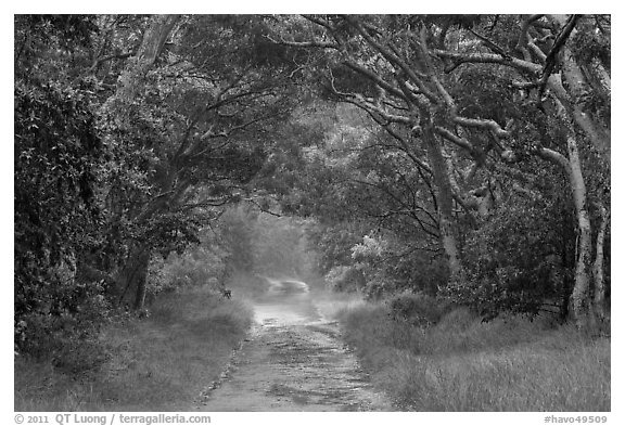 Mauna Load Road. Hawaii Volcanoes National Park (black and white)