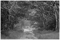 Mauna Load Road. Hawaii Volcanoes National Park ( black and white)