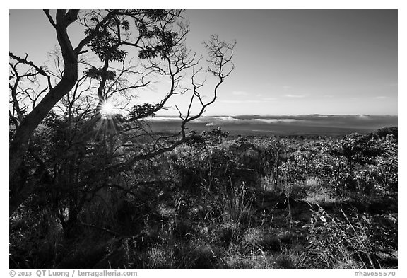 Sunrise from Mauna Loa overlook. Hawaii Volcanoes National Park (black and white)