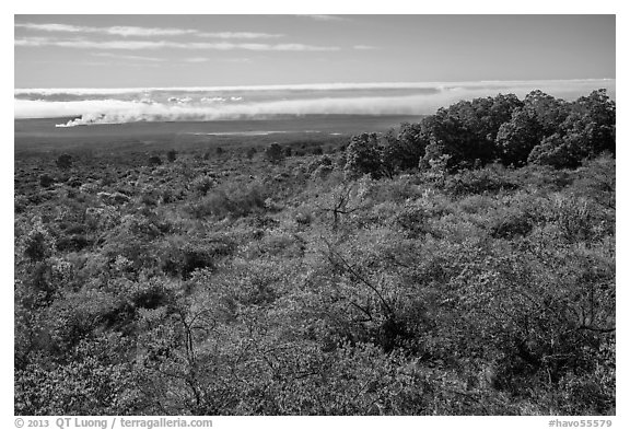 Mauna Loa forested slope and Halemaumau summit. Hawaii Volcanoes National Park (black and white)