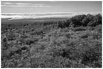 Mauna Loa forested slope and Halemaumau summit. Hawaii Volcanoes National Park, Hawaii, USA. (black and white)