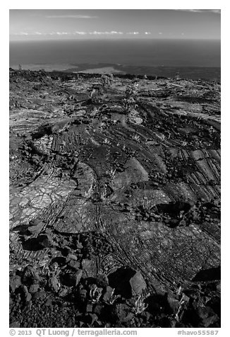 Ferns and Ohelo on lava flow above Pacific. Hawaii Volcanoes National Park (black and white)