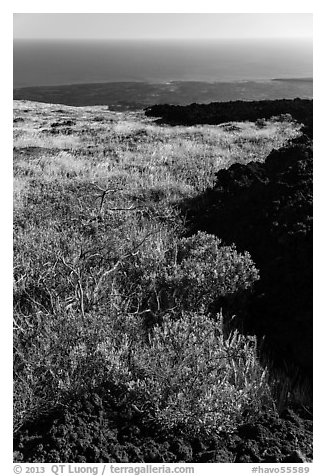 Grass patch bordering barren aa lava flow. Hawaii Volcanoes National Park (black and white)