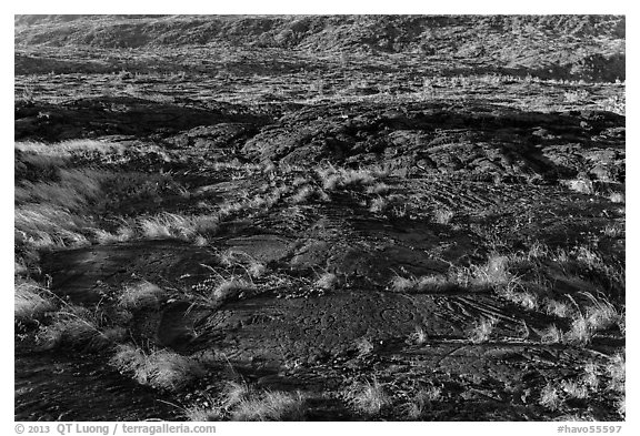 Petroglyphs created on the lava substrate. Hawaii Volcanoes National Park (black and white)