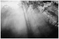 Backlit trees and sun rays in thermal steam. Hawaii Volcanoes National Park, Hawaii, USA. (black and white)