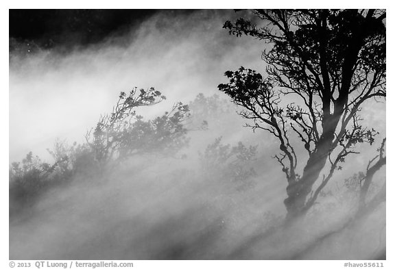 Trees and volcanic steam, Steaming Bluff. Hawaii Volcanoes National Park (black and white)