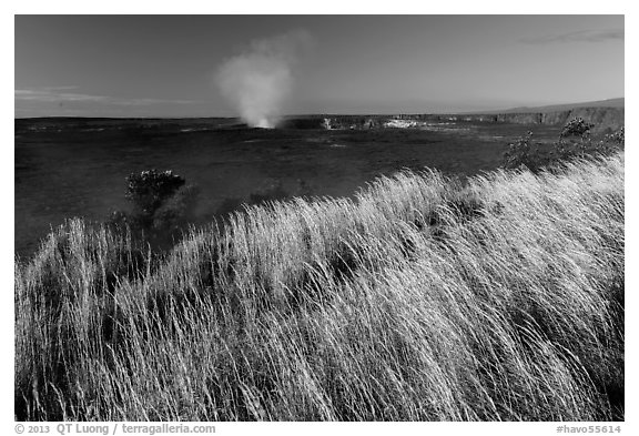 Grasses on rim of Halemaumau Crater. Hawaii Volcanoes National Park (black and white)