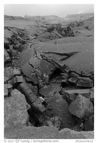 Fractured Kilauea Iki crater floor. Hawaii Volcanoes National Park (black and white)