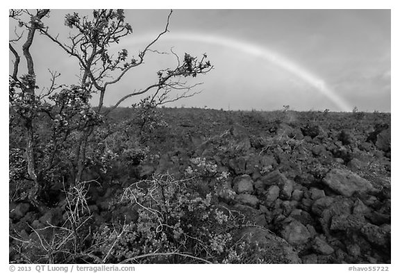 Ohelo shrub, lava field, and rainbow. Hawaii Volcanoes National Park (black and white)