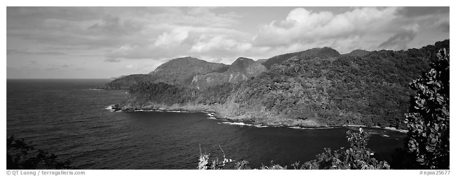 Verdant coasline with tropical vegetation, Tutuila Island. National Park of American Samoa (black and white)