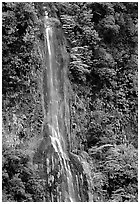 Ephemeral waterfall formed after the rain, Tutuila Island. National Park of American Samoa ( black and white)