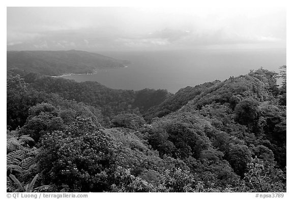 View from Mont Alava, Tutuila Island. National Park of American Samoa (black and white)