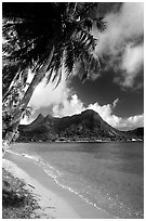 Palm-fringed beach in Vatia Bay, Tutuila Island. National Park of American Samoa (black and white)