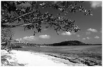 Tropical Almond (Terminalia catappa), beach on Hawksnest Bay. Virgin Islands National Park, US Virgin Islands. (black and white)