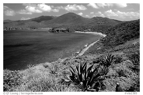 Agaves on Ram Head. Virgin Islands National Park (black and white)