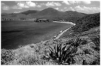 Agaves on Ram Head. Virgin Islands National Park, US Virgin Islands. (black and white)