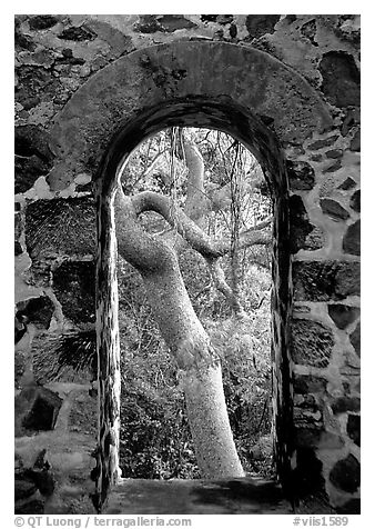 black and white picture photo trees through window of old sugar mill virgin islands national park. Black Bedroom Furniture Sets. Home Design Ideas