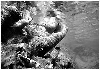 Coral and water surface. Virgin Islands National Park, US Virgin Islands. (black and white)
