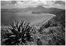 Agaves and cactus, and turquoise waters, Ram Head. Virgin Islands National Park, US Virgin Islands. (black and white)
