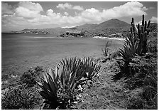 Agave and tropical turquoise waters on Ram Head. Virgin Islands National Park, US Virgin Islands. (black and white)