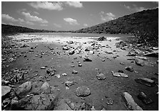 Salt Pond. Virgin Islands National Park, US Virgin Islands. (black and white)