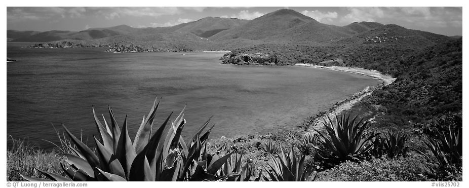 Agave plants growing on drier part of island. Virgin Islands National Park (black and white)