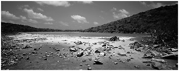 Pond with quicksand. Virgin Islands National Park (Panoramic black and white)