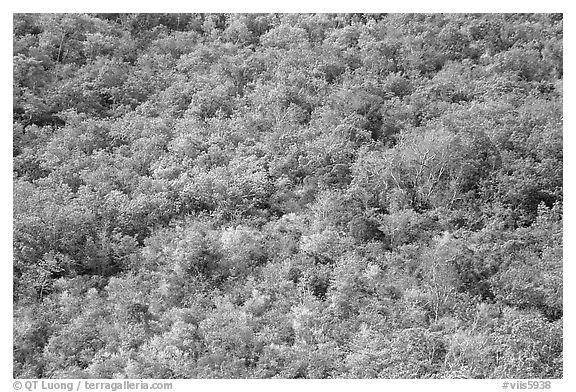 Tropical forest. Virgin Islands National Park (black and white)