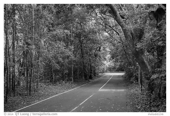 North Shore road. Virgin Islands National Park (black and white)