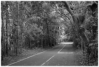 North Shore road. Virgin Islands National Park ( black and white)