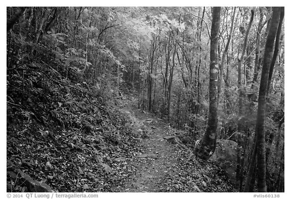 Reef Bay trail. Virgin Islands National Park (black and white)