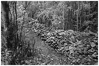 Trail bordered by rock wall. Virgin Islands National Park ( black and white)