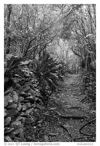 Trail and plants growing on rock wall. Virgin Islands National Park (black and white)