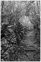 Trail and plants growing on rock wall. Virgin Islands National Park ( black and white)