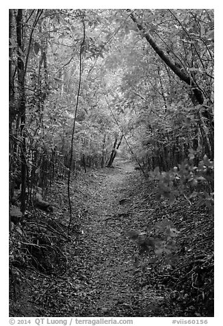 Petroglyph Trail. Virgin Islands National Park (black and white)