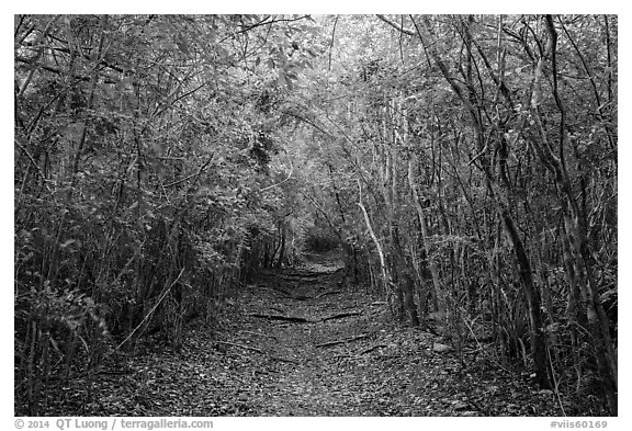 Trail in dry tropical forest. Virgin Islands National Park (black and white)