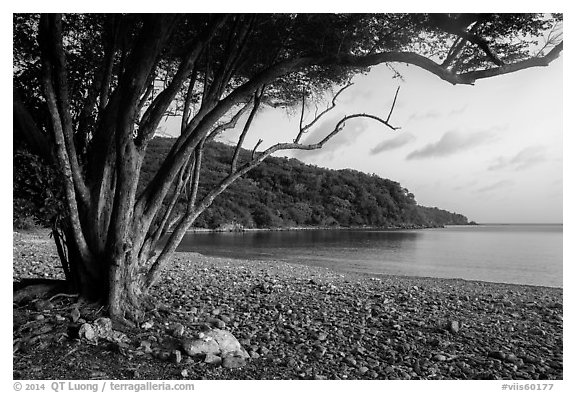 Great Lameshur Bay beach. Virgin Islands National Park (black and white)