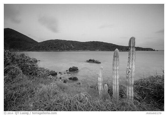 Cactus, Great Lameshur Bay from Yawzi Point. Virgin Islands National Park (black and white)