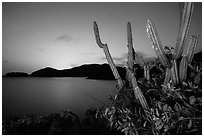 Cactus from Yawzi Point at sunset. Virgin Islands National Park ( black and white)