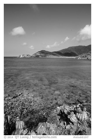 Turk cap cactus and turquoise waters, Little Lameshur Bay. Virgin Islands National Park (black and white)