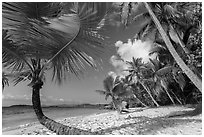 Palm trees on Salomon Beach. Virgin Islands National Park ( black and white)