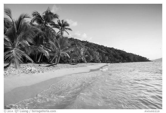 Clear waters and palm trees in the evening, Salomon Beach. Virgin Islands National Park (black and white)