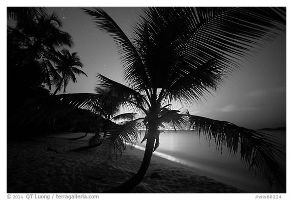 Palm tree and lights of St Thomas, Salomon Beach. Virgin Islands National Park (black and white)