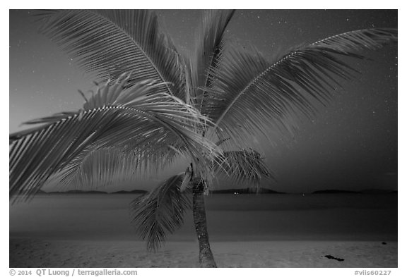Palm tree and beach at night, Salomon Beach. Virgin Islands National Park (black and white)